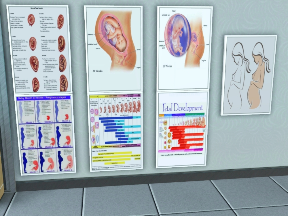 Medical Posters - Fetal Development (1/3)