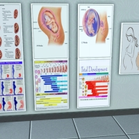 Medical Posters - Fetal Development